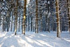 日落在德国冬天森林里 库存图片