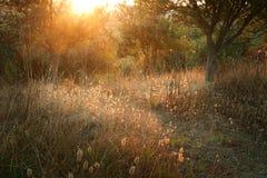 日落在托斯卡纳意大利 免版税库存图片