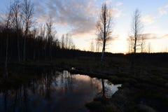 日落在春天在太阳在树后设置的森林沼泽的晚上 库存照片