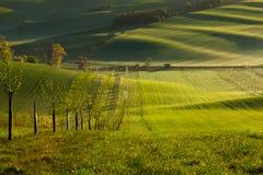 日落在春天标示并且挥动用树 免版税库存图片