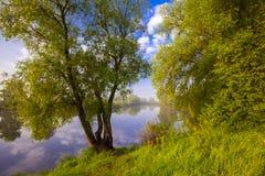 日落在春天森林里 免版税库存照片