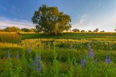 日落在春天森林里 免版税库存图片