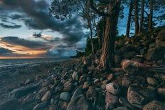 日落在有杉木的波罗的海 库存照片