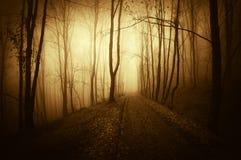 日落在有道路和雾的一个黑暗的鬼的森林里在万圣夜 免版税库存照片