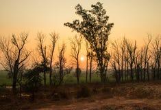 日落在树之间的森林 免版税库存照片