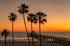 日落在棕榈树和曼哈顿比奇码头下 免版税库存图片