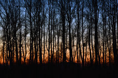 日落在森林秋天森林里 免版税图库摄影