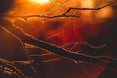 日落在森林里,细节,红色口气 库存图片