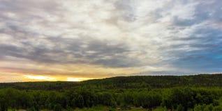 日落在森林里 免版税库存照片