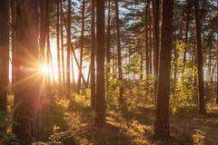 日落在森林里 库存照片