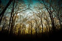 日落在森林 免版税库存图片