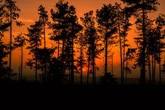 日落在森林 库存照片