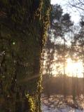 日落在森林 库存图片