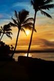 日落在毛伊夏威夷的棕榈树 库存图片