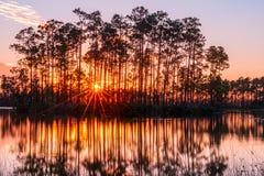 日落在沼泽地 免版税库存照片