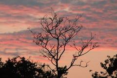 日落在沿海森林地森林里  免版税库存图片