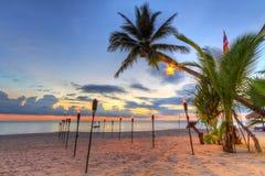 日落在海滩的热带棕榈树下 免版税库存图片