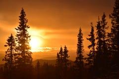 日落在深森林里 库存照片