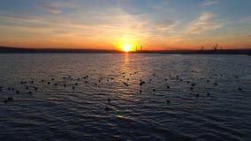 日落在湖的寄生虫飞行,小水低头 股票录像