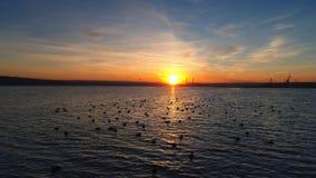 日落在湖的寄生虫飞行 鸭子在水中 影视素材