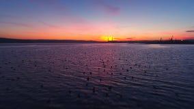 日落在湖的寄生虫飞行 鸭子在水中 股票视频