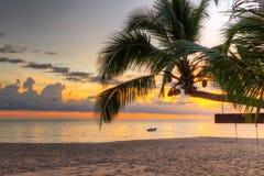 日落在热带棕榈树下 库存照片