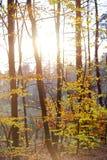 日落在秋天森林里 免版税库存图片