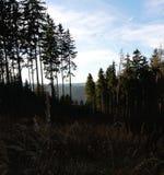 日落在秋天草甸 库存图片