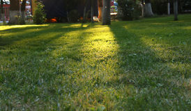 日落在自然公园 库存图片
