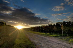 日落在葡萄园里 库存图片