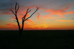 日落在路易斯安那沼泽 库存图片