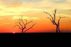 日落在路易斯安那沼泽 免版税库存图片