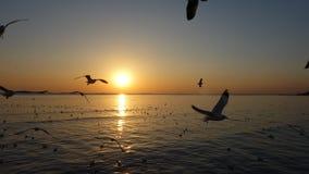日落在轰隆Pu海边 库存图片