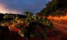 日落在阿尼昂,法国 免版税图库摄影