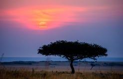 日落在马赛马拉国家公园 闹事 肯尼亚 图库摄影