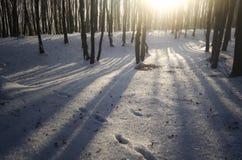 日落在冻森林里在冬天 免版税库存照片