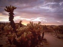 日落在Cholla仙人掌庭院里 库存照片