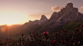 日落在Passo与花在前景,白云岩,意大利的di Giau的夏天 股票视频