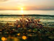 日落在Popova海岛 免版税图库摄影
