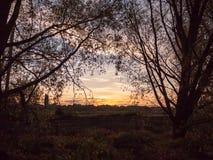 日落场面黑暗的前景树剪影美好的颜色b 免版税库存图片
