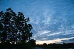 日落天空和森林 免版税库存照片