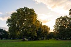 日落太阳火光秋天秋天绿色黄色火热的天空公园森林 库存照片