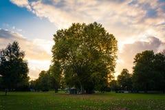 日落太阳火光秋天秋天绿色黄色火热的天空公园森林 免版税图库摄影