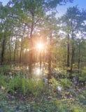 日落太阳通过秋天木头的分支发光,并且反映在水池与跌倒叶子 库存照片