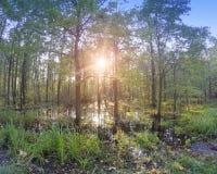 日落太阳通过秋天木头的分支发光,并且反映在水池与跌倒叶子 免版税库存图片