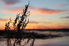 日落太阳野花使自然环境美化 免版税库存照片
