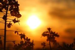 日落开花细节 库存照片