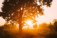 日落或日出在有薄雾的森林风景 与自然的太阳阳光 免版税库存照片