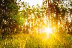 日落或日出在森林风景 与自然的太阳阳光 库存照片