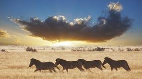 日落斑马 免版税库存图片